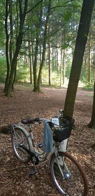 Fotos machen im Wald