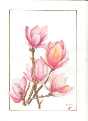 Tulipiers aquarelle nov 2016