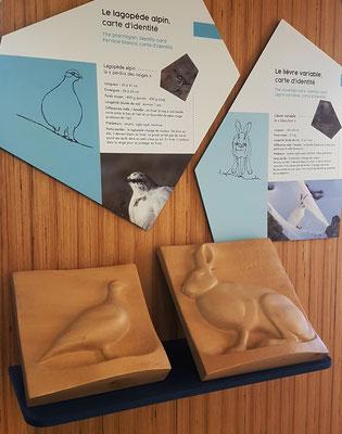Parc National des Ecrins - Maison du Parc de Briançon - sculptures tactiles - Lagopède et Blanchon