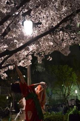 桜、さくら、花がソノ葉ニ、カワルマデ