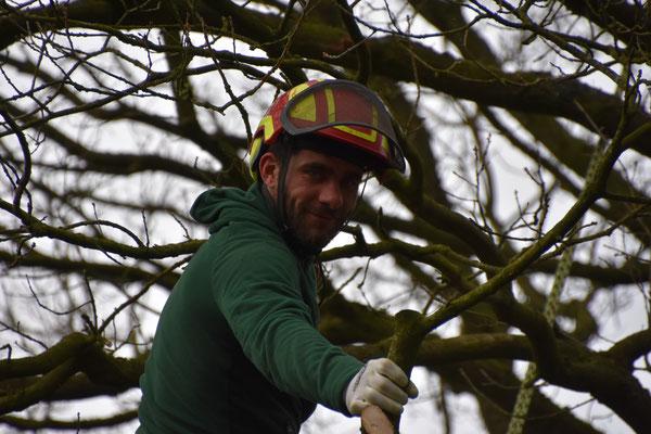 Baumpfleger Hardy Krause