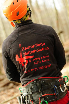 Baumpflege Mittelholstein