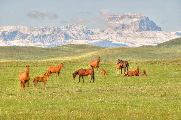 In Alberta treffen die Rocky Mountains auf die Prärie