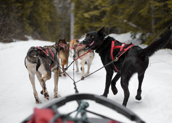 Breidenbach Education Cold Fire Creek Dog Sledding © Don Henson@awesomedon
