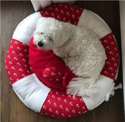 Hundekissen Rettungsring