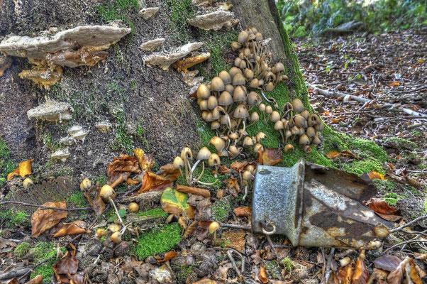 Wald Stillleben