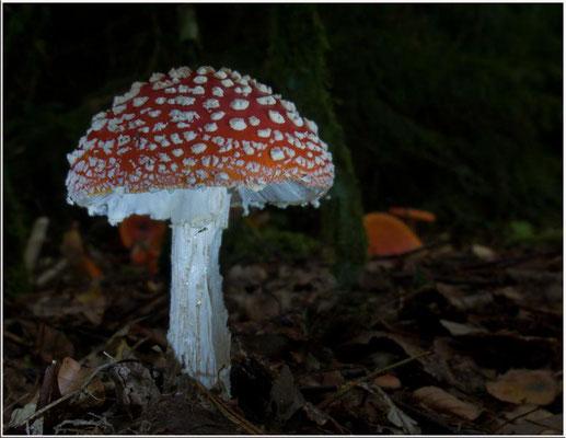 Ein Pilzlein steht im Walde...