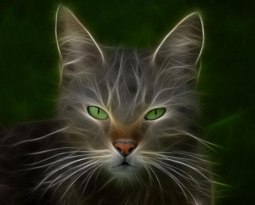 Katzen-Magie