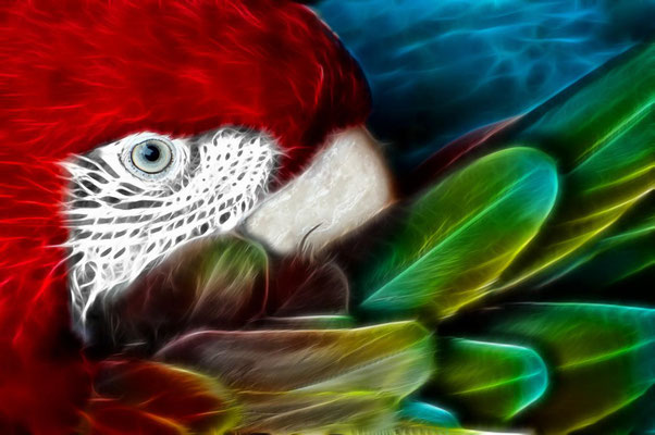 Ara multicolor 3