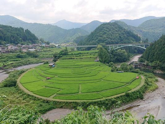 和歌山県有田川のあらぎ島ですよ!