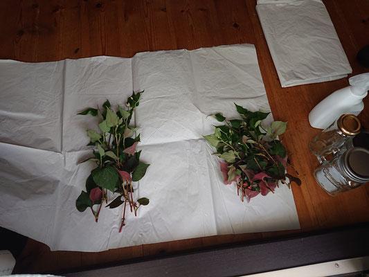 茎と葉は乾燥させるのに大きさをそろえます。