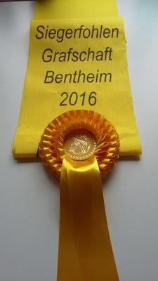 Beethoven (Buckingham x Fürst Nymphenburg) wurde Siegerfohlen bei den dressurbetonten Hengstfohlen.