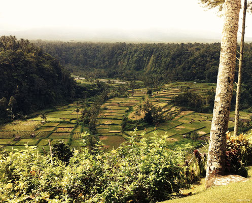 Rizières - Bali
