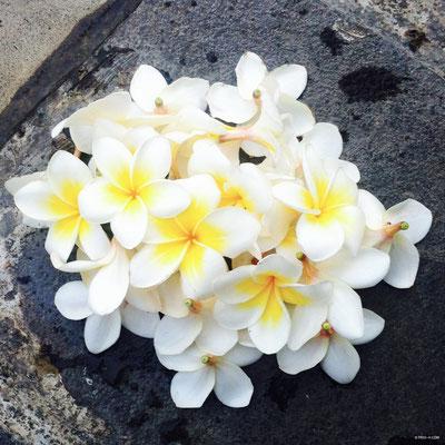 Sanur - Bali