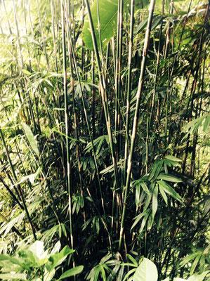 Munduk Forest - Bali