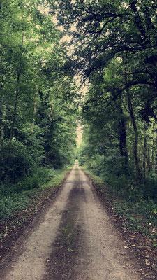 Chemin forestier - Forêt de Retz - Aisnes