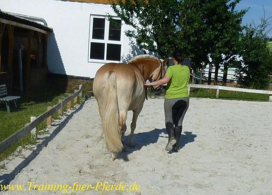 gymnastizierende Bodenarbeit: Schulterherein auf der Geraden