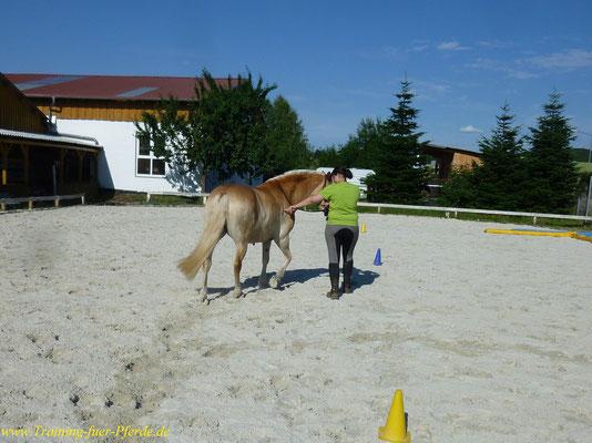 gymnastizierende Bodenarbeit: Stellen und Biegen auf gebogene Linien