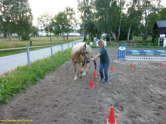 gymnastizierende Bodenarbeit: Stellen und Biegenauf gebogene Linien