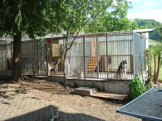 Es sind fünf Abteile für je Zwei Hunde aus Meiko Elementen. Je nach Bedarf kann umgestellt werden.