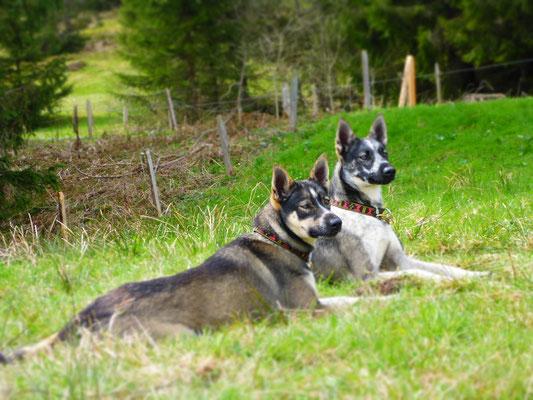 Geschwisterliebe - Alta und Roros