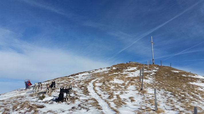 Auch mit wenig Schnee geht mit disziplinierten Hunden noch viel, WoW!