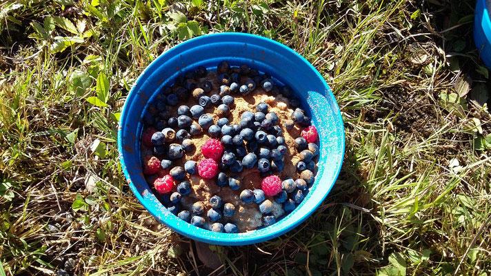Leckeres Frühstück - Porridge mit Waldbeeren!