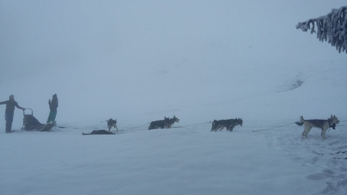 Gästefahrten im Nebel