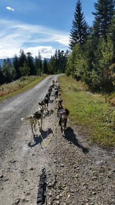 Mit 14 Hunden am Troll gehts zur Hütte hoch.
