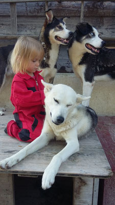 Und Zeit für Fellpflege, Taiga lässt sich gern von Alva kämmen.