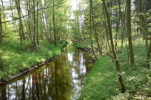 Die Mühlenau im Ruhehain Süd
