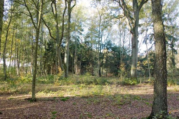 Eiche mit gelbem Band (Gemeinschaftsbaum) im Ruhehain Nord