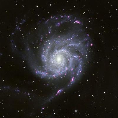 Messier M101 - 22x900s LUM + RGB + Ha, mit Darks und Flats, 28.-31.03.2019