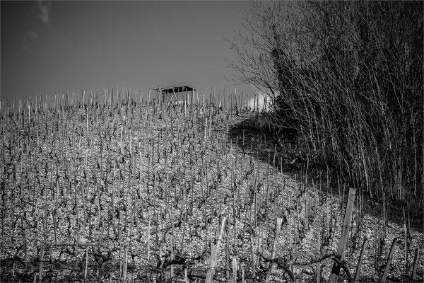 Vigne des coteaux de Tain