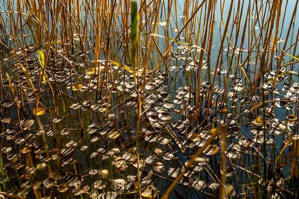 Au bord de l'étang de Joanna Maria