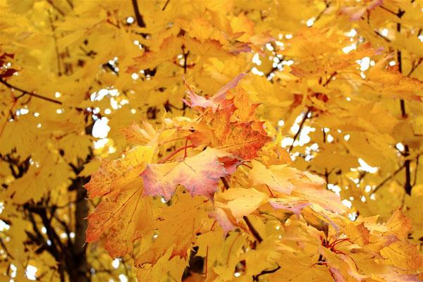 Feuille d'automne sur Lens-Lestang