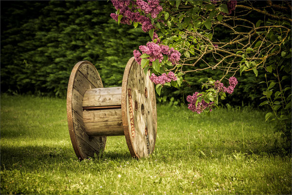 Lila du jardin