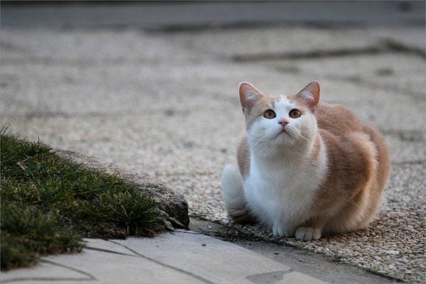 La regrettée chatte Vanille