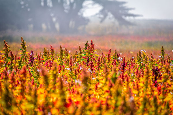 Field of Colours | Das Feld der Farben