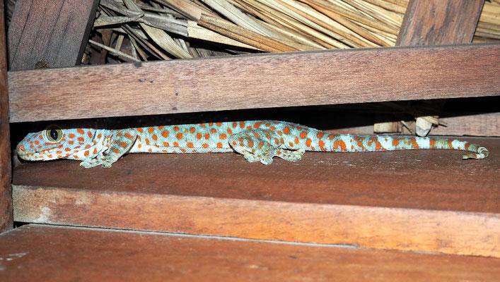 Erwischt - Gecko auf unserer Terrasse im Sweet Dreams