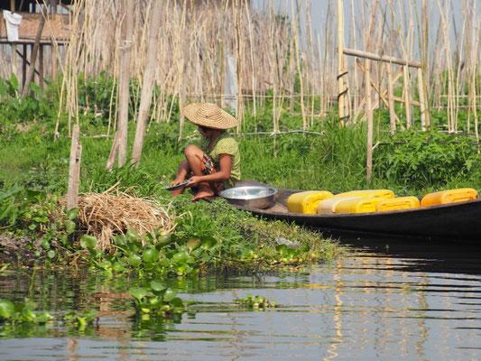 Ernten mit Boot - Inthafrau zwischen den schwimmenden Gärten