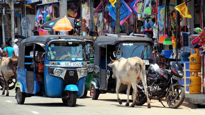 Kühe gehören in Mutur zum Verkehr