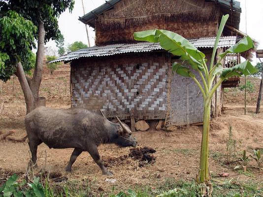 Subsistenz - Wasserbüffel in Loi Kin Village,...