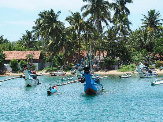 Traditionell - Fischerboote im Hafen von Mirissa