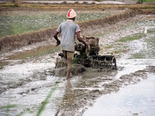 Die Reisbauern brauchen für den Nassreis den jährlichen Monsun