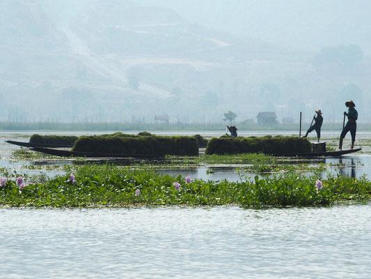 Boote mit Wasserhyazinthen, die die Gärten zum Schwimmen bringen