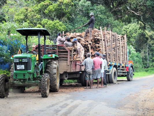 Holz -wichtiger Rohstoff