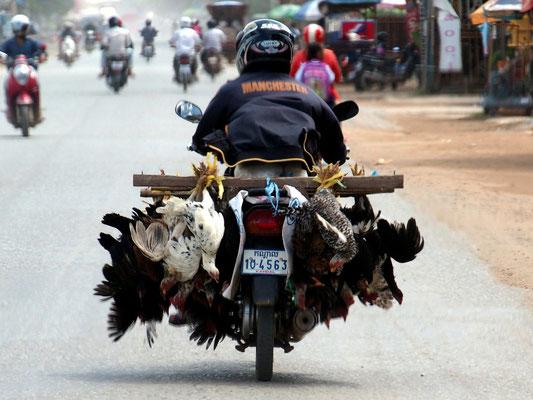 Hühnertransport in Phnom Penh - da kann man zum Vegetarier werden