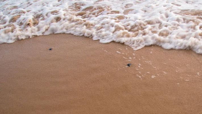 ... des Strandes von Mirissa