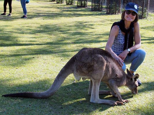 ... zutrauliche Känguruhs, ...